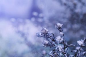 Dried Flowers by SaRaH-22