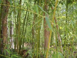 Bamboo Forest by Critterinthedryer