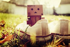 danbo by stevenfields