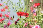 Wild Flowers by Tiger--photography