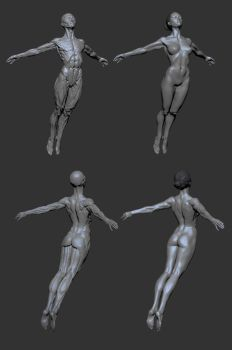 female anatomy by mojette
