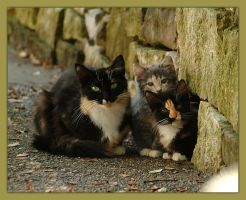 feline family by phlezk