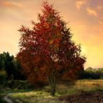 Autumn surrender by JacqChristiaan