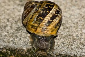 snail on the path 4 by speed-demon