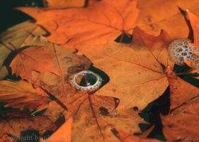 Autumn Eye by plumita1