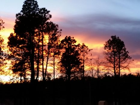 Trees at Sunset by Tyrannosaur17
