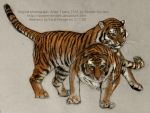 Amur Tigers 1541 Drawing by Fatal-Noogie