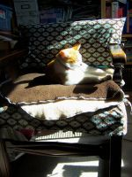 Ugly seat covers, pretty cat by WhiteAntCrawls