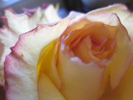 Withering Roses 3 by RatherDreary