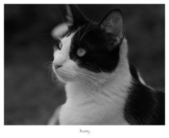 Buddy by relhom