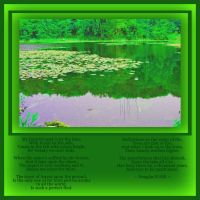 297 Reflections by A-P-H-1965