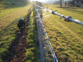Barded Wire Wool by Fadedhowl