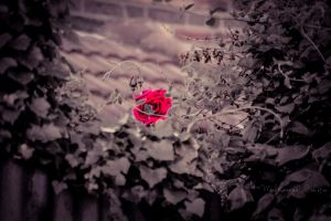 Rose within the rough by DestinyMedia