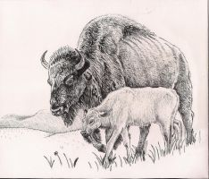 Bison and Calf by rhyshaug