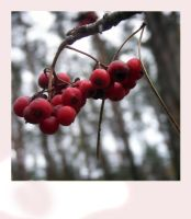 ashberry by Galaher