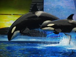 Double The Beauty by OECDLapushfan101