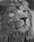Majesty, graphite pencil by Sarahharas07