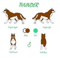Thunder Reference Sheet 2013 by TheDragonInTheCenter