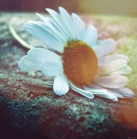 melancholy of flower by tash-to