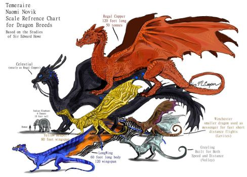 Dragon Breeds Size Refrence by Shadowind