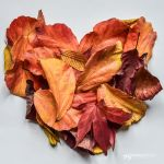 fall in love by akthuro