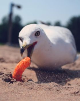 Seagull stealing my snack by Ph0Xy
