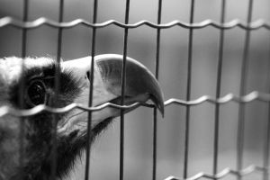 Caged Bird 15948368 by StockProject1