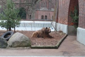 The pitiable bears of Berlin by SirLeo-von-Pard