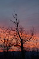 Sycamore Sunset by AppareilPhotoGarcon