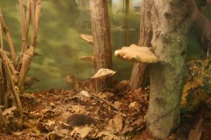 STOCK PHOTO musem woodland by MaureenOlder