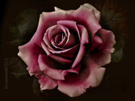 Rose Passion by ROSASINMAS