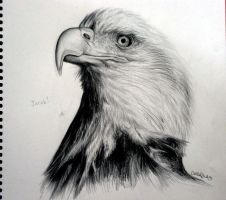 Eagle by CallieFink