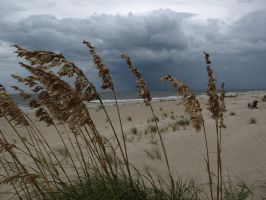 Storm and the Sea Oats by Rikkanna