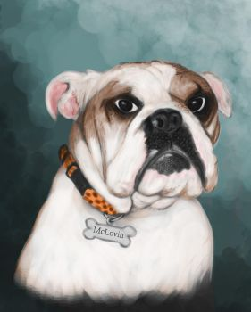 McLovin: The English Bulldog by sman118
