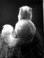 White Cat - Silver Scratchboard by Meorow