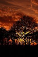 Sunset and trees by ukwreckdiver