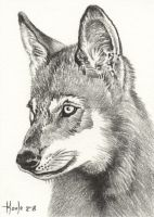Young Pup - Timber Wolf by HOULY1970