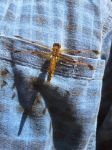 Dragonfly on my shirt by SJRT
