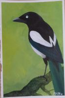 a magpie by LoD90