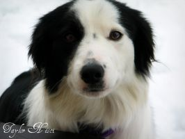 snow puppy by tailsxo