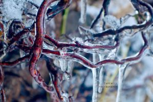 Frozen Contortionist by EmersonStem