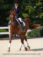 Warmblood 45 by EquineStockImagery