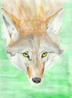 Coyote '2 by Sollerion