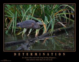 Determination poster by LoneWolfPhotography