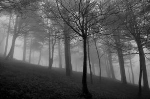 Fog Wood by AzeemElvehir