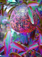 pomegranate on acid...... by neon-crocodile