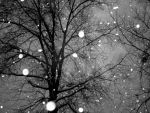 falling snowflakes by ashley711