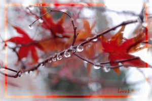 japanese maple drops by loveandtears