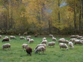 Sheep Field 1264662 by StockProject1