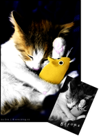 Colorization - Cute cat by Evelyn2